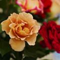 春のバラ展8-2