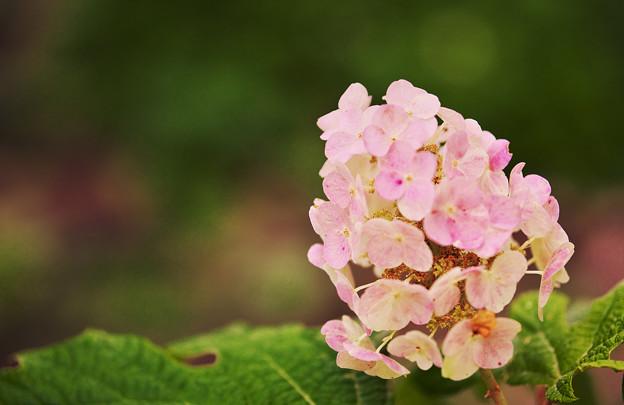 初夏の花2-5