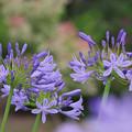 Photos: 初夏の花4-2