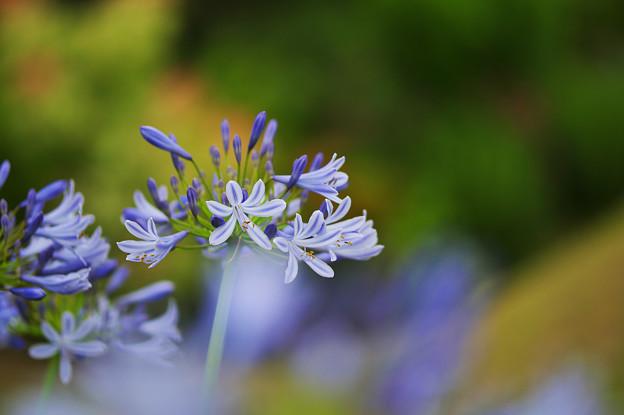 初夏の花4-3