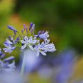 Photos: 初夏の花4-3