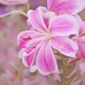 Photos: 初夏の花4-4