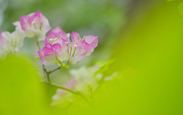 初夏の花4-5