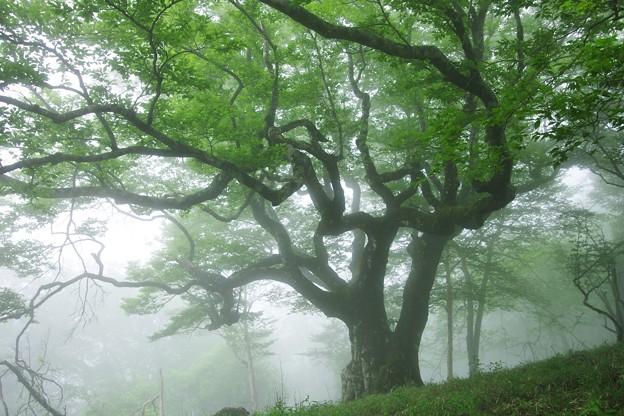 Photos: 尊厳の大樹