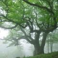 尊厳の大樹