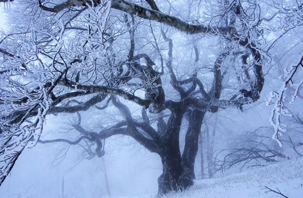 尊厳の大樹-2
