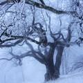 Photos: 尊厳の大樹-2