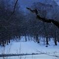 Photos: 上高地 吹雪 -