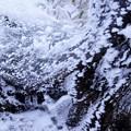Photos: 凍り付く根