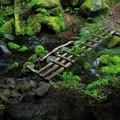 Photos: 癒しの登山道 2