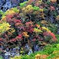 Photos: 岩肌の錦