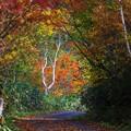 秋の林道歩きは楽し