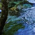 Photos: 湿原の流れ