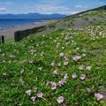 茅ヶ崎の海 2