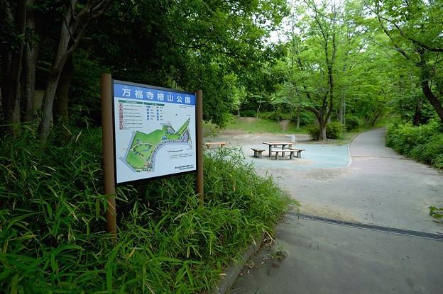 5361万福寺檜山公園