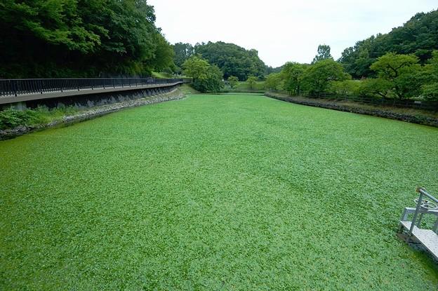 1852林ヶ谷池