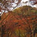 Photos: 秋色