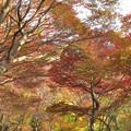 Photos: 色づく木々