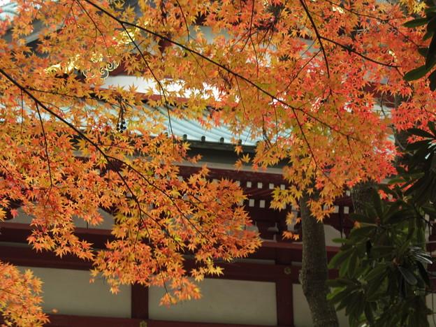 斜陽に映える紅葉