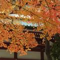 Photos: 斜陽に映える紅葉