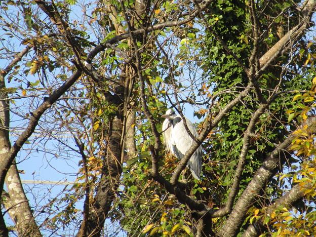 Photos: IMG_4526