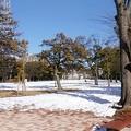 写真: 残雪の公園