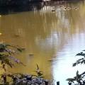 写真: 冬の池
