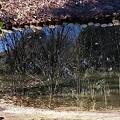 写真: 逆さ景色