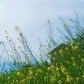 写真: 春を惜しんで