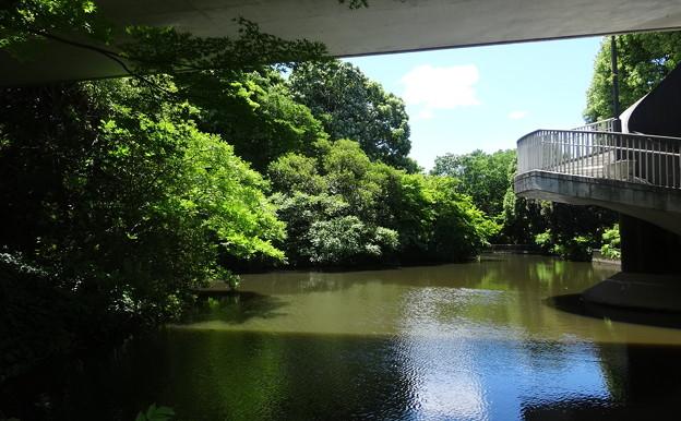 緑地公園の池