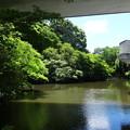 写真: 緑地公園の池