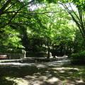 写真: 森林浴