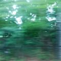 写真: 流れる緑