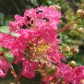 Photos: 華麗な花