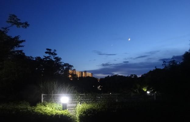 写真: 三日月を眺めて