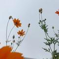 写真: 花と蕾