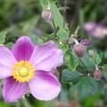 写真: 可憐な花