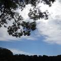 枝も見ている秋の空