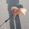 お散歩、うれしいワン