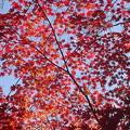 Photos: 赤い空