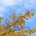 Photos: 青空が似合う