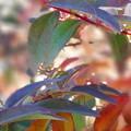 Photos: 彩る葉っぱ