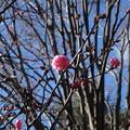 Photos: 春へ
