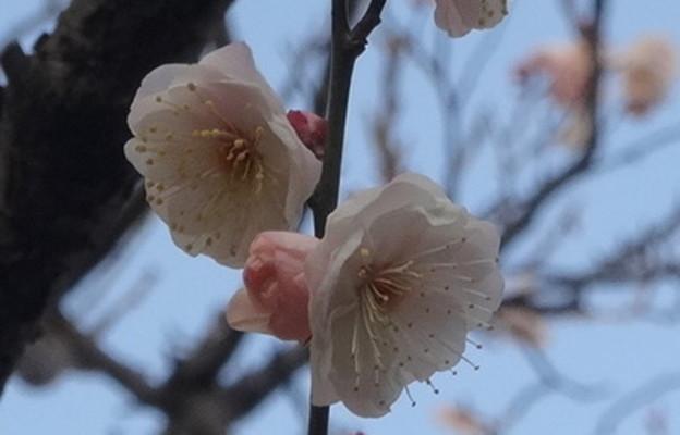 春はすぐそこ  2/2
