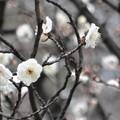 Photos: 花まる