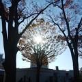 晩秋の太陽