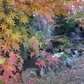 「モミジの滝」  2
