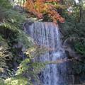 「モミジの滝」  3