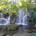 「モミジの滝」  4