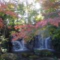 「モミジの滝」  1